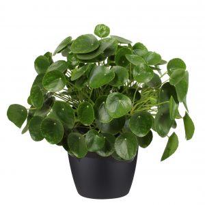 Mooie en veilige plant voor de babykamer en kinderkamer